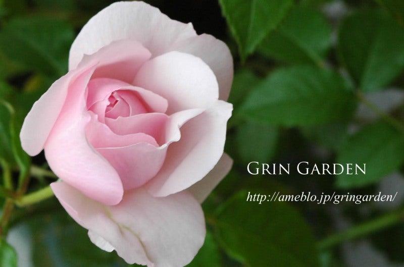 Grin garden - Grey gardens dive per sempre ...