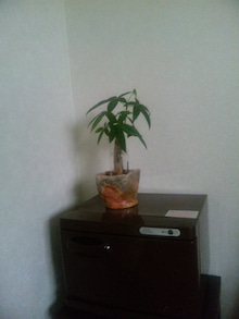 ~Tree of life~神奈川県大和市レインドロップ・アロマリンパトリートメント・ボディケア・足つぼ・波動調整のサロン-SBSH0279.JPG