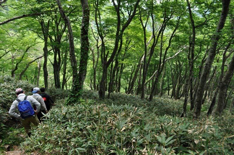 $白神山地ツアーの白神なびスタッフブログ-2012年6月上旬の白神山地・二ツ森10