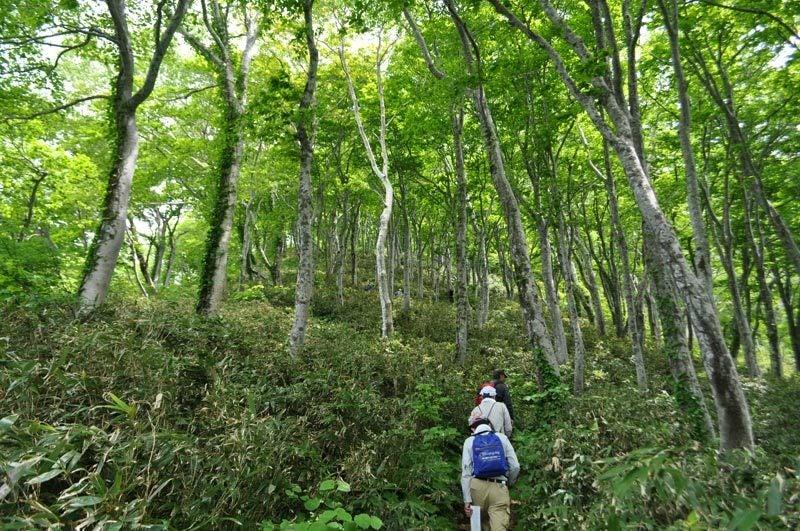 $白神山地ツアーの白神なびスタッフブログ-2012年6月上旬の白神山地・二ツ森8