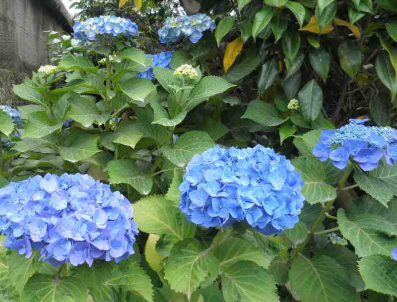 みけにゃんママの花と猫と自然と自然にライフイン鹿児島☆