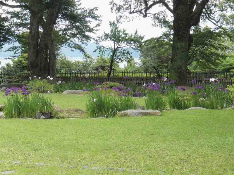 $みけにゃんママの花と猫と自然と自然にライフイン鹿児島☆