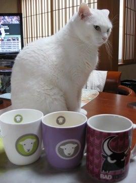 ネコとカップ