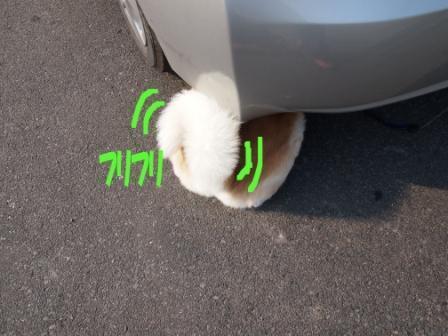 秋田犬カイの日常-ふりふり