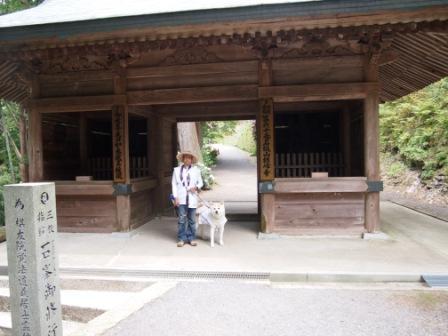 秋田犬カイの日常-横峰寺8