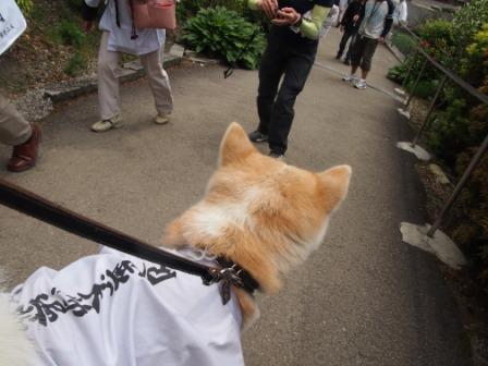 秋田犬カイの日常-横峰寺3