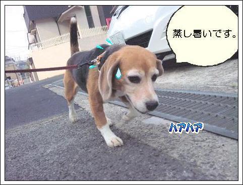 ももちゃん村へようこそ!!