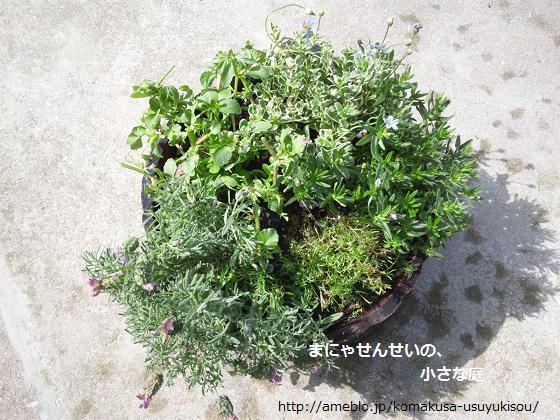 まにゃせんせいの、小さな庭-春の寄せ植えきり戻し