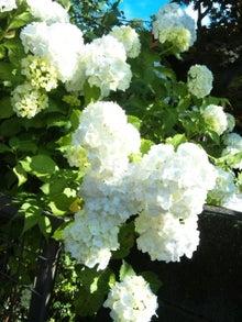 オカメインコのももちゃんと花教室と旅日記-120610_073042.jpg