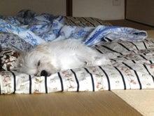 うさぎの音楽談議-でも、昼寝も大切です!
