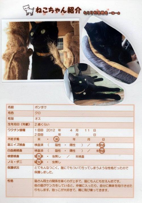 シアカウ-ねこたちと手作り小物でシアワセカウント-ボンすけプロフィール