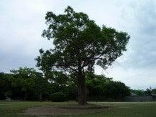 練気武颯拳&東洋医学でFreeな心と身体♪-明石公園2012.6.12