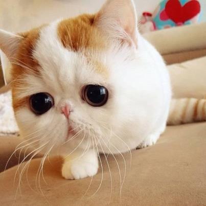 【癒し画像】可愛い猫ちゃん♪