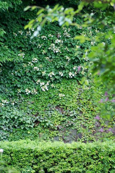 Nora レポート ~ワンランク上の庭をめざして~