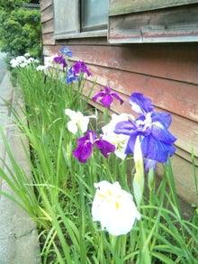 オカメインコのももちゃんと花教室と旅日記-120611_133218.jpg