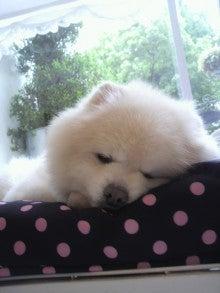 ASAMI's DOG LIFE-2012052314560001.jpg