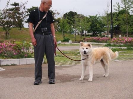 秋田犬カイの日常-ちーちゃん1