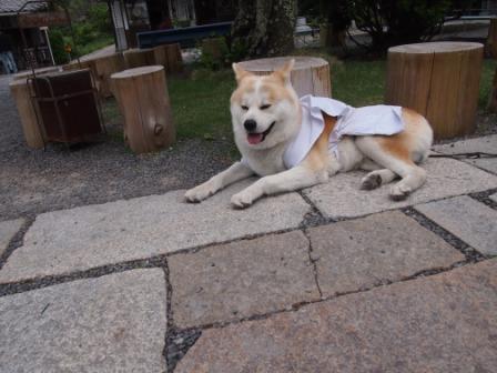 秋田犬カイの日常-出釈迦寺1