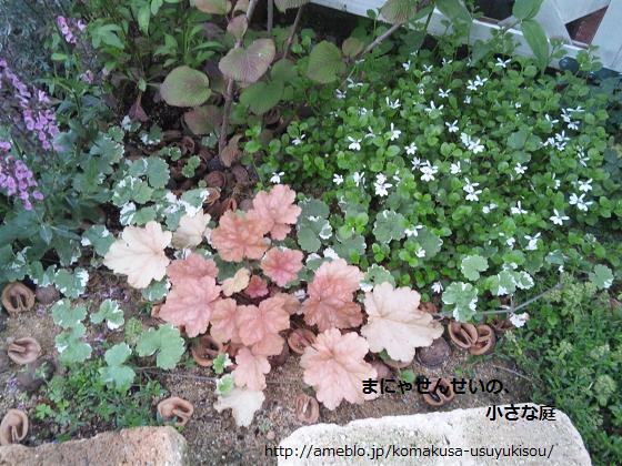 まにゃせんせいの、小さな庭-緑とコントラスト