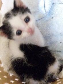 溺愛猫のツレヅレ猫日記-120530_213230.jpg