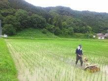 真心ファーマーズ|無農薬・無化学肥料 のお米|兵庫県上郡町-DSC_1540.JPG