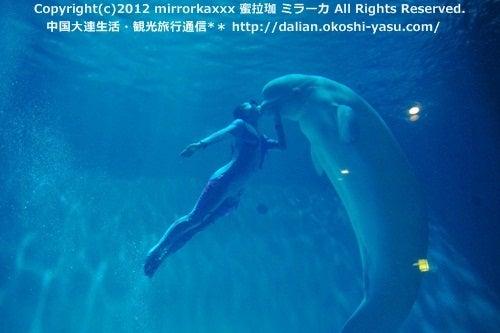 中国大連生活・観光旅行ニュース**-大連 白鯨伝奇 シロイルカショー
