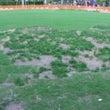 プレイスの芝生