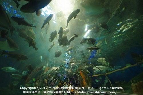 中国大連生活・観光旅行ニュース**-大連 聖亜海洋世界
