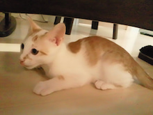 PFL★MIKIのブログ-2012062223530000.jpg