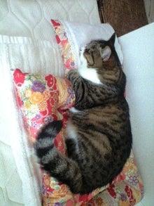 ずれずれブログ…湘南で猫と暮らせば…-120623_1510~0001.jpg