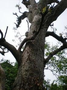 夫婦世界旅行-妻編-宝戒寺の木