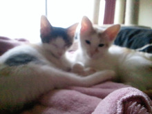 PFL★MIKIのブログ-2012062418140000.jpg