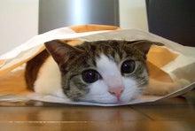 $あの手帳 アイリンクインベストメント社員ブログ-猫