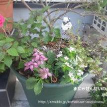 オリーブと夏花の寄せ…