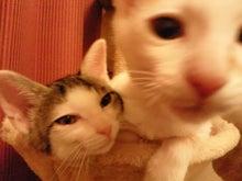 PFL★MIKIのブログ-2012062600430000.jpg