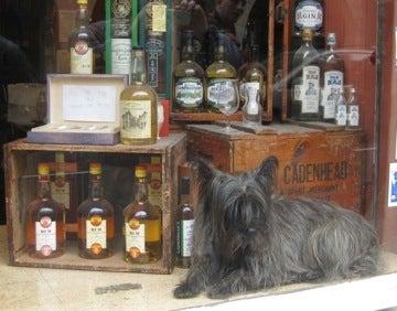 ボビーとソックリの犬