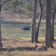 トラ保護区のエコリゾ…