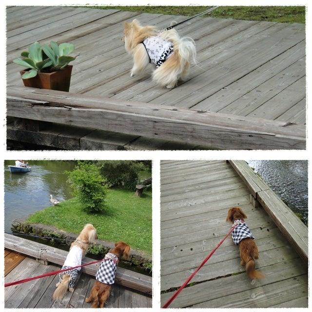 旅犬Lani&Leaのほほん風船記-タリアセン
