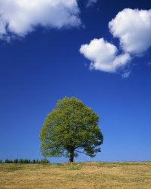 ふるさきまきこの強みトリセツ★by強み活用ラボ-樹木