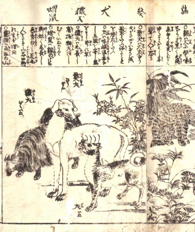 帝國ノ犬達-犬