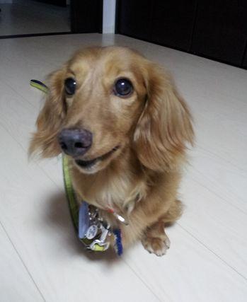 ☆CATNAP☆  保護犬預かり日記