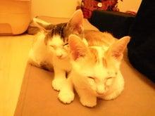 PFL★MIKIのブログ-2012062800480000.jpg