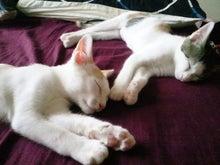 PFL★MIKIのブログ-2012062813170000.jpg