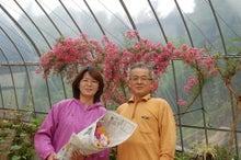 $福島県在住ライターが綴る あんなこと こんなこと-20120624-2花卉農家さん