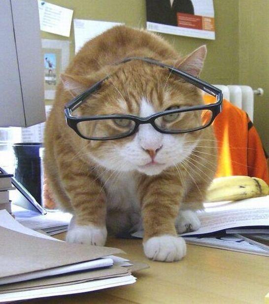 おもろいこと大好きぃぃ((((´゚゚∀゚゚`))))ノ♪-【萌え萌え】 猫耳眼鏡っ子
