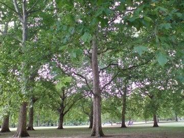 グリーンパーク1