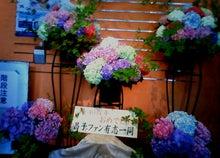 新潟だより-40周年記念・生花