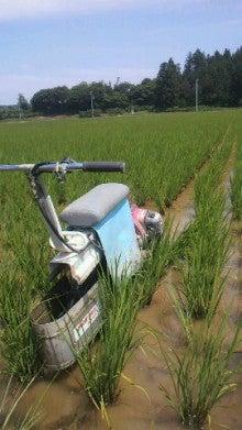 里本庄四季の風 いそべ農場-2012062910230000.jpg