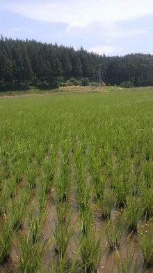 里本庄四季の風 いそべ農場-2012062910270000.jpg