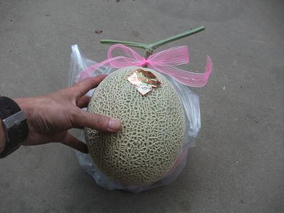 農業のトータルコーディネータ  イノウエ農商事のブログ-07044